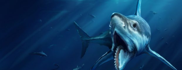 Q Significa Shark Helicoprion   Los Porq...